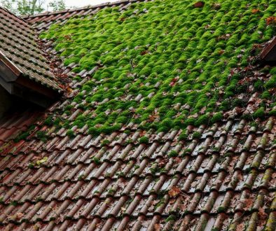 Shingle-Roof-With-Green-Moss